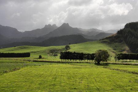 peninsula: Beautiful green meadows of New Zealand in stormy weather. Stormclouds at Coromandel peninsula, North Island.