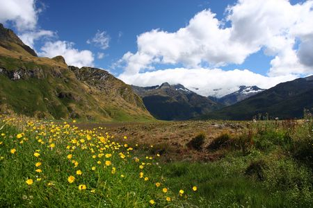 aspiring: Yellow flowers and mountains in Mount Aspiring National Park, New Zealand