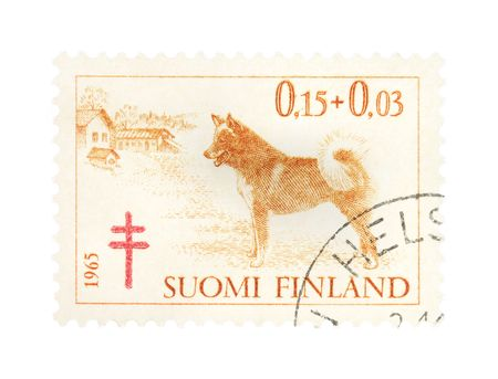 collectible: Collectible old stamp from Finland. Stamp with Finnish spitz dog breed.