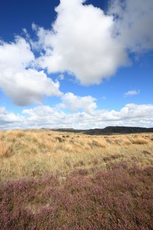 australasia: Heath in Waikato region of New Zealand. Beautiful summer landscape. Stock Photo