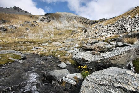 australasia: The Remarkables. Rugged mountains and yellow flowers in New Zealands Otago region. South Island. Stock Photo