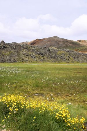 Iceland. Beautiful mountains and yellow flowers. Famous volcanic area with rhyolite rocks - Landmannalaugar. photo