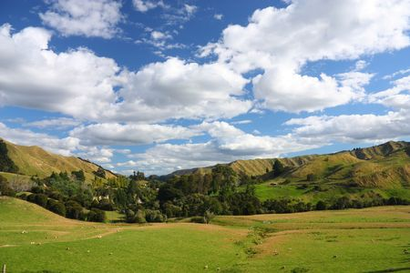 australasia: Hills and meadows of New Zealand. Green pastures with sheep grazing in Wanganui district. Stock Photo