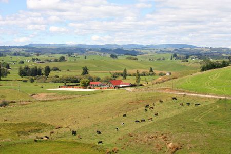 Hills and meadows of New Zealand. Green pastures and a farm with cows grazing in Wanganui district. photo