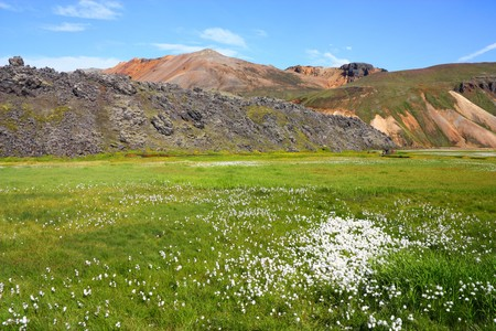 felsic: Iceland. Beautiful mountains and white cottongrass. Famous volcanic area with rhyolite rocks - Landmannalaugar.