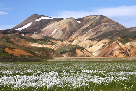 plateau of flowers: Iceland. Beautiful mountains and white cottongrass flowers. Famous volcanic area with rhyolite rocks - Landmannalaugar.