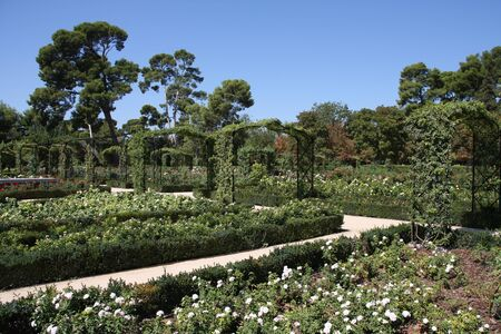 Beautiful rosarium in Madrid Buen Retiro park. Garden in Spanish capital city. photo