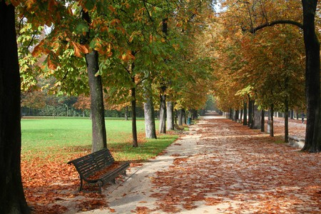 ducale: Parma, Italy - Emilia-Romagna region. Ducale Park - autumn view with chestnut trees. Stock Photo