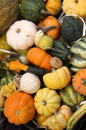 Autumn harvest at a market in Italy - various squashes and pumpkins including zucchini, yellow crookneck squash and cucurbita photo