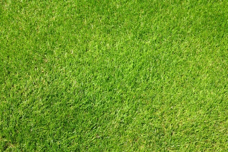 Green grass background texture. Golf course lawn abstract view.