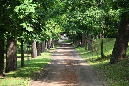 wielkopolska: Tree lined alley in City Park of Kalisz, Poland. It is the oldest city park in Poland.