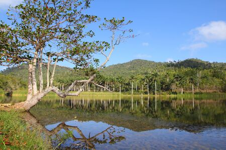 the biosphere: Cuba, famous Biosphere Reserve in Sierra del Rosario mountain range - Las Terrazas. Stock Photo
