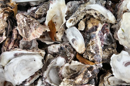 Oyster shells background in Hiroshima, Japan - typical cuisine of Chugoku region Stock Photo - 13909767