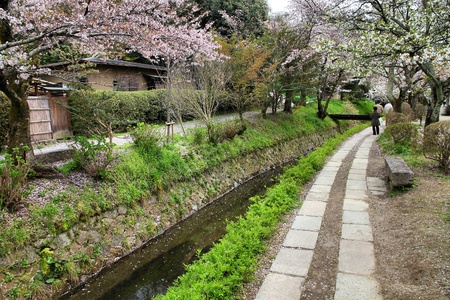 Kyoto, Japan - Philosophers Walk, a hiking path famous for its cherry blossom (sakura) photo