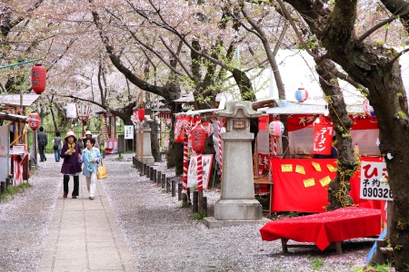 KYOTO, JAPAN - APRIL 17: Visitors enjoy cherry blossom (sakura) on April 17, 2012 in Hirano Shrine garden, Kyoto, Japan. The Shrine existing since 794 is famous for its gardens and cherry blossom. Stock Photo - 16743711