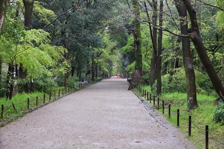 Kyoto, Japan - forest of Shimogamo gardens. Park footpath. photo