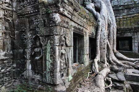 Ta Prohm -  abandoned Khmer temple in Angkor, Cambodia, Southeast Asia. photo
