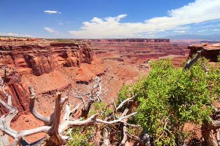 Canyonlands National Park in Utah, USA. Island in the Sky district. Stock Photo - 26501368