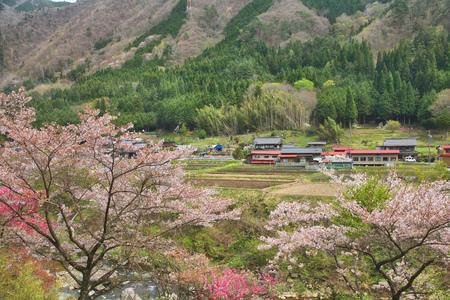 chubu: Cherry blossom in countryside in Gifu prefeture of the region Chubu, Japan.