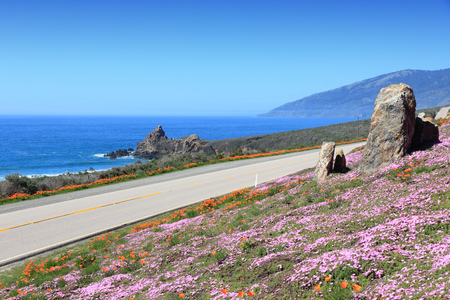 California united states pacific coast highway scenic drive california united states pacific coast highway scenic drive cabrillo highway with flowers publicscrutiny Image collections