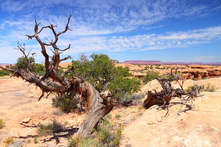 Canyonlands National Park in Utah, USA. Island in the Sky district. Stock Photo - 28684964