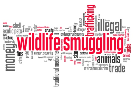 contrabbando: Wildlife contrabbando - problemi di criminalit� ambientale e concetti word cloud illustrazione. Word collage concetto.