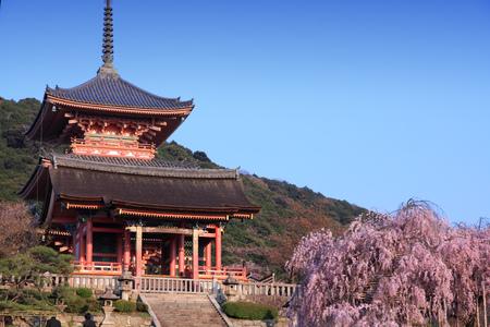 arbol de cerezo: Kyoto, Jap�n - Templo de Kiyomizu-dera. Templo budista zen de Rinzai. Parte del Patrimonio Mundial de la UNESCO.