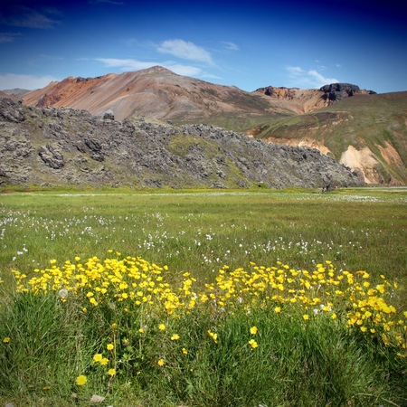 felsic: Iceland. Beautiful mountains and yellow flowers. Famous volcanic area with rhyolite rocks - Landmannalaugar. Square composition. Stock Photo