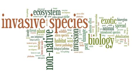 invasive plant: Invasive species - environment issues and concepts word cloud illustration. Word collage concept. Stock Photo