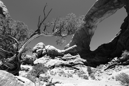 north window arch: Arches National Park in Utah, USA. Famous Window Arch. Black and white tone - retro monochrome color style.