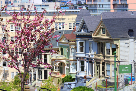 blossom tree: San Francisco, California, United States - Painted Ladies, Victorian homes at Alamo Square (Western Addition neighborhood).