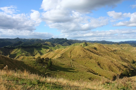 New Zealand - green hills of Manawatu-Wanganui region.