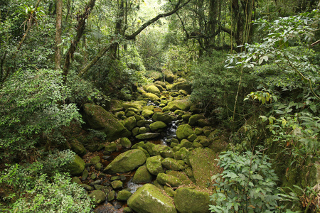 Brazil - jungle view in Mata Atlantica (Atlantic Rainforest ecosystem) in Serra dos Orgaos National Park (Rio de Janeiro state).