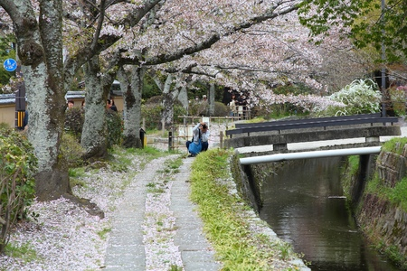 philosophers: KYOTO, JAPAN - APRIL 16, 2012: People visit Philosophers Walk in Kyoto, Japan. Old Kyoto is a UNESCO World Heritage site and was visited by almost 1 million foreign tourists in 2010.