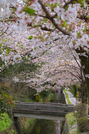 philosophers: Kyoto, Japan - Philosophers Way, a walkin path famous for its cherry blossom (sakura).