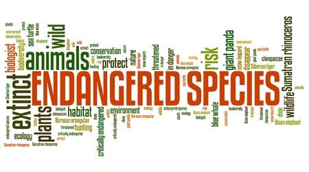 絶滅危惧種 - 環境問題や概念単語雲の図。単語のコラージュの概念。 写真素材