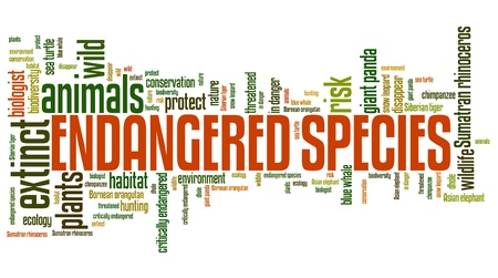 brink: Endangered species - environment issues and concepts word cloud illustration. Word collage concept. Stock Photo