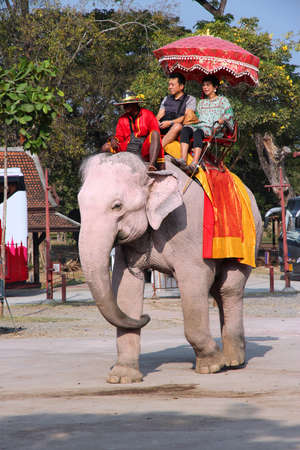 domesticated: AYUTTHAYA, THAILAND - DECEMBER 23, 2013: Tourists ride elephants in Thailand. Thailand currently has some 2,700 domesticated elephants.