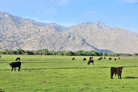 sierra nevada mountain range: California, United States - cattle ranch with Scodie Mountains in the background (part of Sierra Nevada). Kern County.