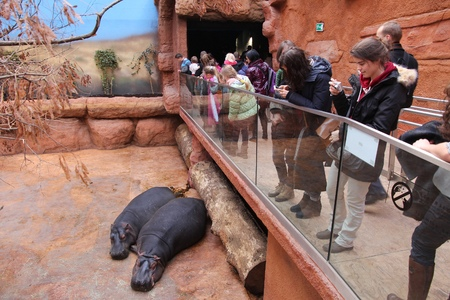 the zoo: WROCLAW, Polonia - 31 de enero, 2015: La gente visita Afrykarium en Wroclaw Zoo. Afrykarium es una nueva construcci�n (2014) pabell�n africano con unas 100 especies de animales.
