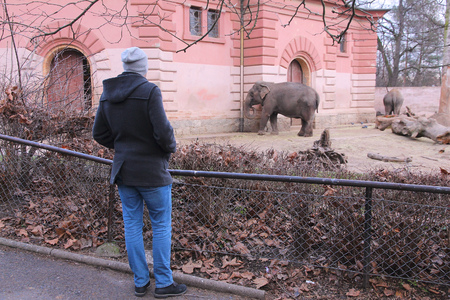 zoological: WROCLAW, POLAND - JANUARY 31, 2015: Person visits Wroclaw Zoo. Wroclaw Zoological Garden has 7,100 animals of more than 850 species.