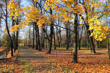 park path: Autumn colors in October. Poland - city park path in Bytom.