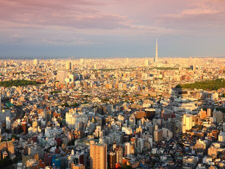 aerial view city: Tokyo aerial view - city skyline with Bunkyo and Taito wards. Sunset light.