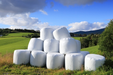 agricultural area: Hay bales packed in white plastic in Norway. Agricultural area in the region of Oppland.
