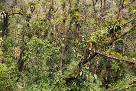 jungla: Brasil - selva en la región de Paraná. La naturaleza la selva tropical. Foto de archivo