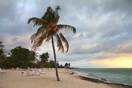 holguin: Guardalavaca beach in Holguin Province, Cuba. Palm tree.