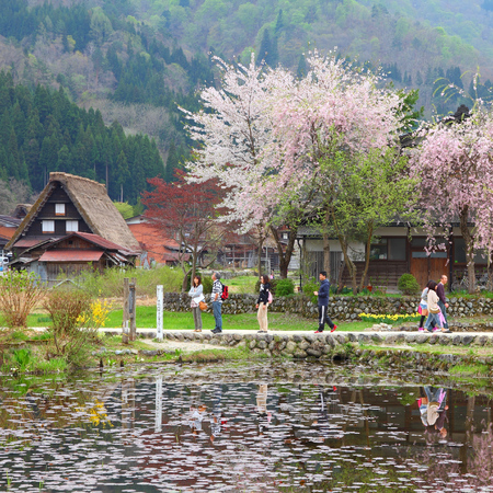thatched house: SHIRAKAWA, JAPAN - APRIL 28, 2012: Tourists visit old village in Shirakawa-go, Japan. Shirakawa-go is one of most popular attractions in Japan, listed as UNESCO World Heritage Site since 1995.