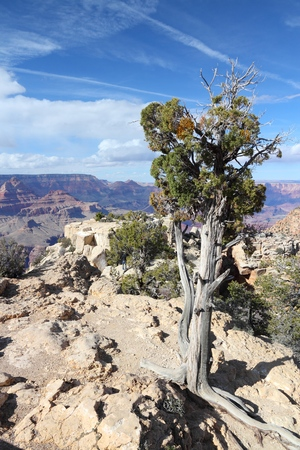 point of view: Grand Canyon National Park in Arizona, United States. Moran Point view.