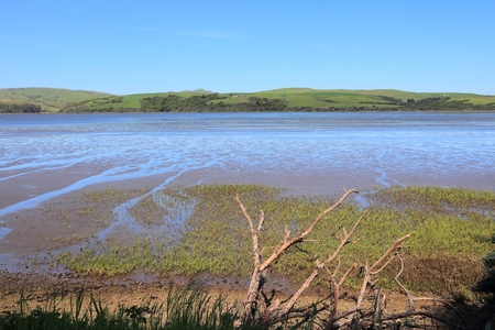 salt marsh: California - Tomales Bay Ecological Reserve with salt marsh and tidal flats.