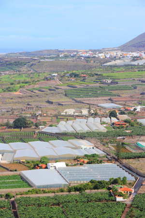 banana: Farms in Tenerife - hothouses and banana plantations. Rural landscape in Buenavista del Norte.